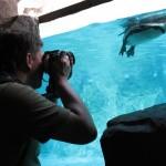 Riprendere animali e pesci