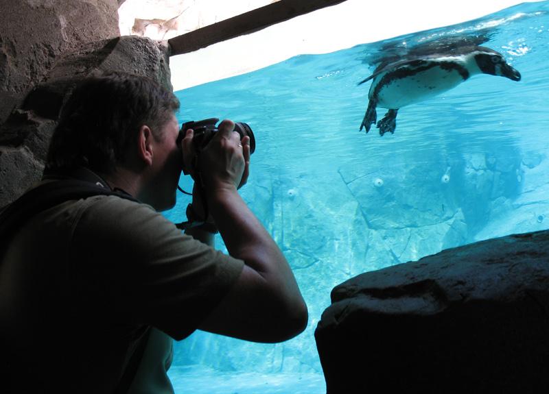 Fotografo che scatto un'immagine stock di un pinguino allo zoo.