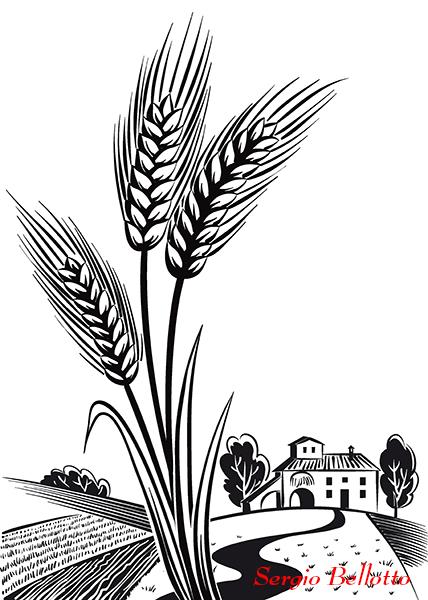 Illustrazione di una pianta di grano creata da Sergio Bellotto