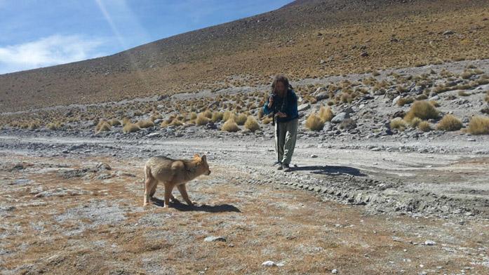 Il produttore di microstock Simone Scalise mentre riprende un lupo in Sud America