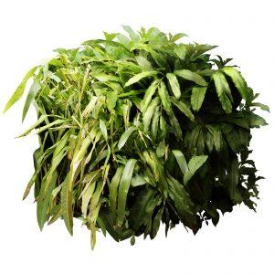 Fotomontaggio di un cubo di foglie