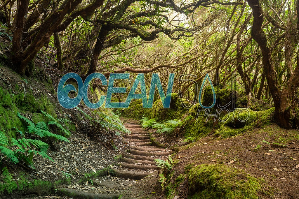 Stock image di un sentiero in una foresta