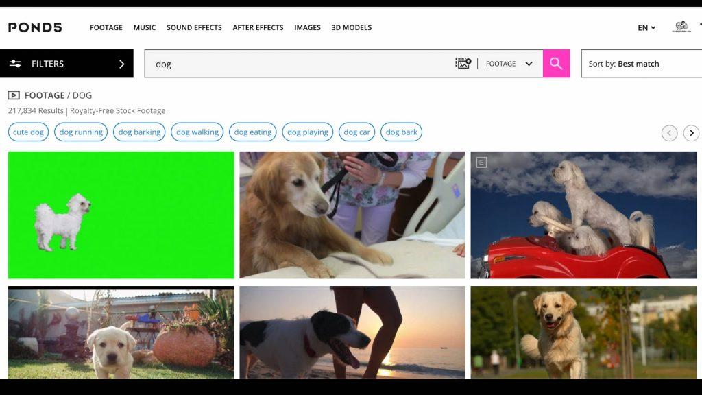 Video best seller con la parola chiave dog su Pond5